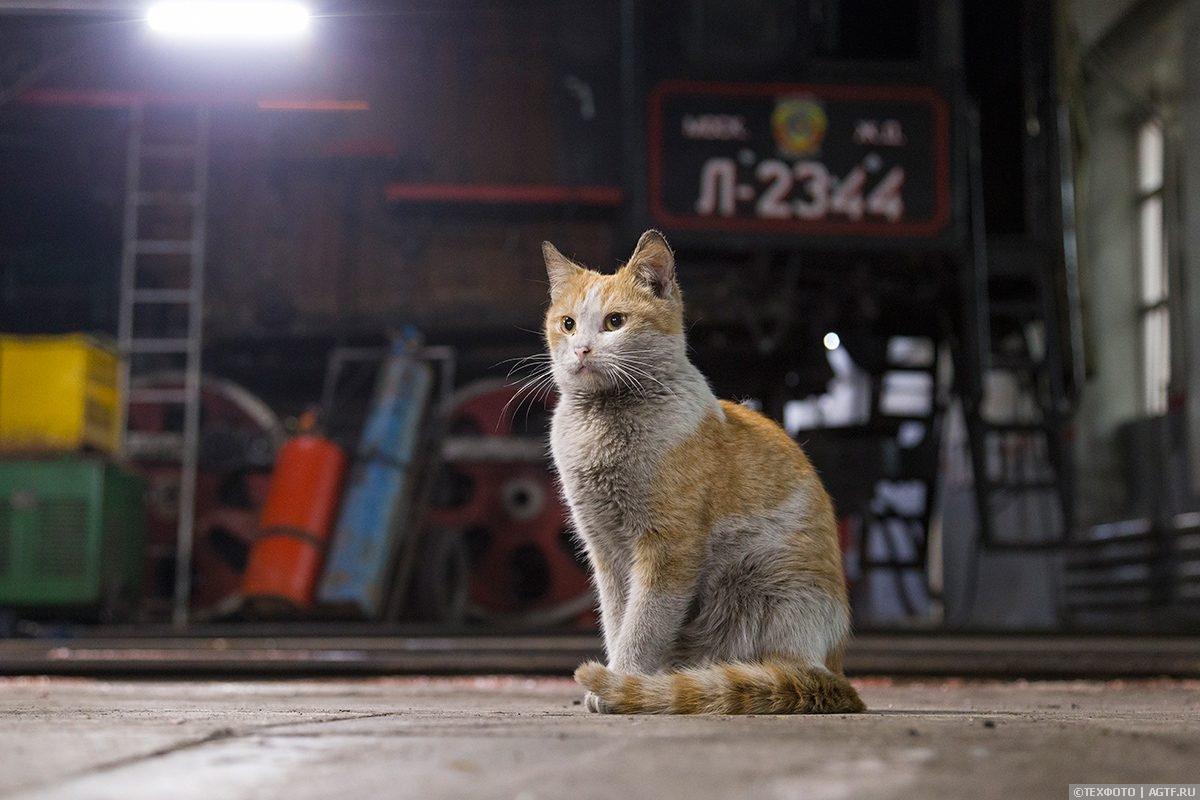 Коты паровозного депо